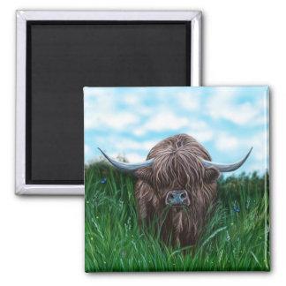 Pintura escocesa de la vaca de la montaña imán cuadrado