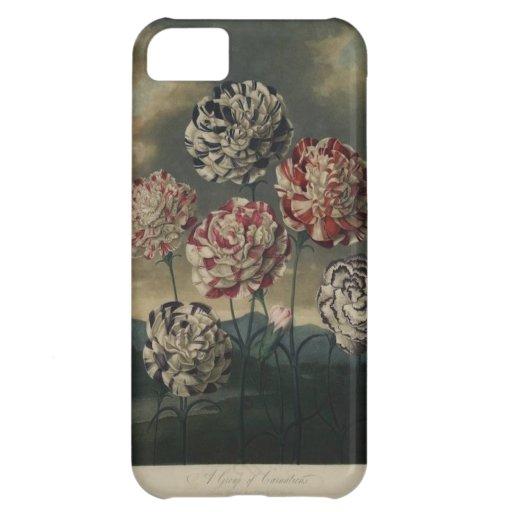 Pintura floral del clavel del vintage funda para iPhone 5C