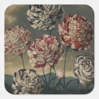 Pintura floral del clavel del vintage pegatina cuadrada
