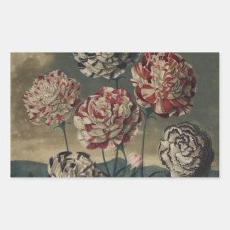 Pintura floral del clavel del vintage pegatina rectangular
