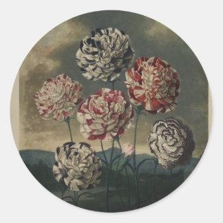 Pintura floral del clavel del vintage pegatina redonda