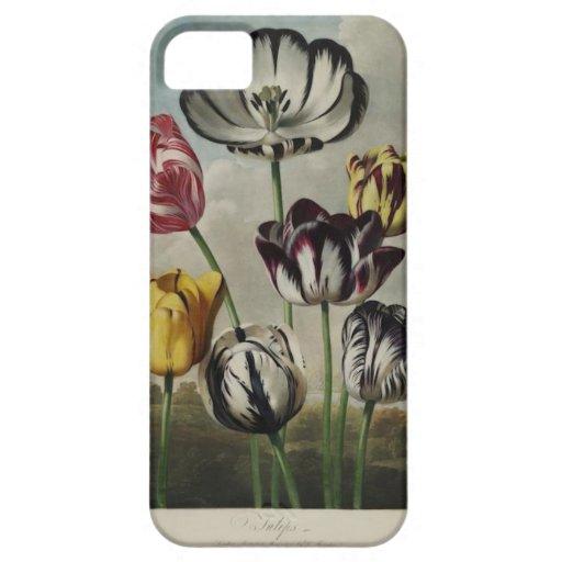 Pintura floral del tulipán del vintage iPhone 5 Case-Mate cárcasa