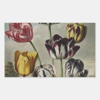 Pintura floral del tulipán del vintage pegatina rectangular
