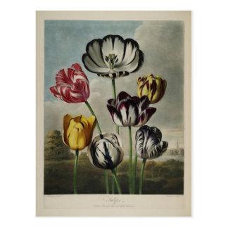 Pintura floral del tulipán del vintage postales