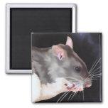 Pintura hermosa de la rata iman para frigorífico