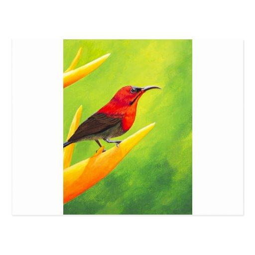 ¡Pintura hermosa de Sunbird!  Artista Elena Esina  Postales