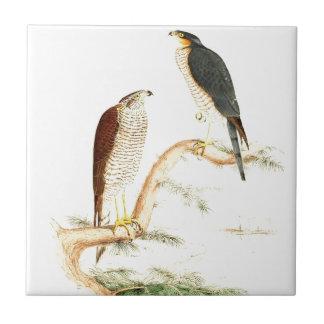 Pintura histórica del pájaro azulejo cuadrado pequeño