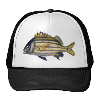 Pintura realista fabulosa de los pescados gorro