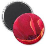 Pintura roja de la flor de la amapola - multi imanes de nevera