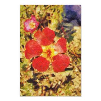 Pintura roja de la flor foto
