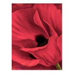 Pintura roja del arte de la flor de las amapolas - tarjeta postal