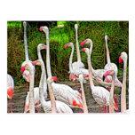 Pintura rosada de los flamencos tarjetas postales