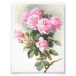 Pintura rosada de los rosas del vintage impresiones fotograficas