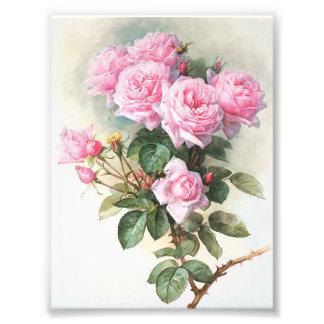 Pintura rosada de los rosas del vintage