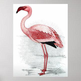 Pintura rosada del flamenco del vintage póster