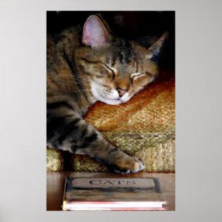 Pintura soñolienta del libro del gato póster