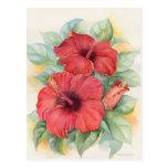 Pintura tropical de la flor del hibisco rojo - mul postal