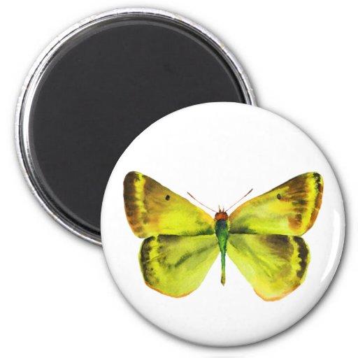 Pintura viva de la mariposa de la acuarela iman de nevera