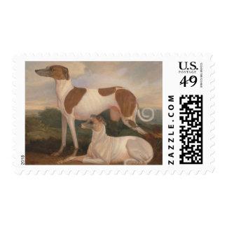 pinturas al óleo de galgos sellos