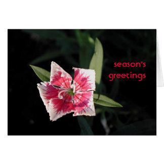 Pinwheel Flower Greetings Card