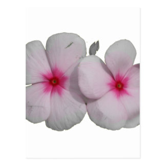 Pinwheel flower pink with natural marks post card
