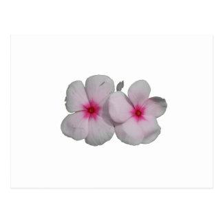 Pinwheel flower pink with natural marks postcards