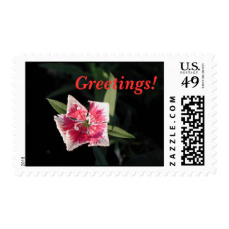 Pinwheel Flower Postage Stamps