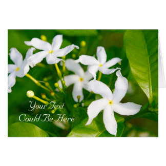 Pinwheel Jasmine (Confederate Jasmine) Card