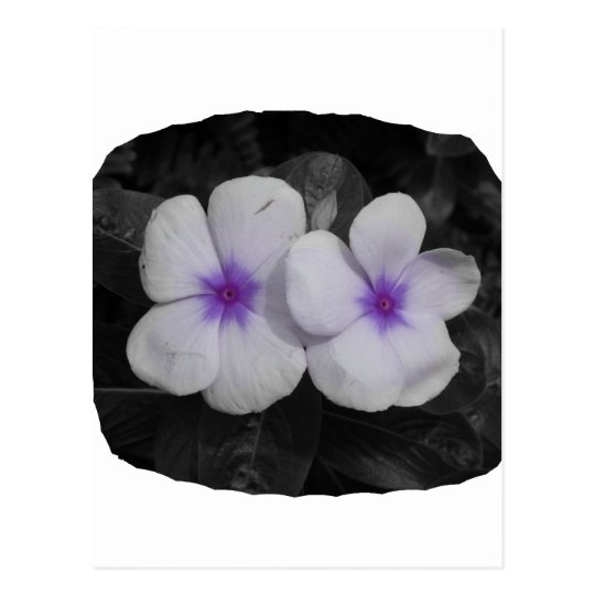 Pinwheel purple circle  flower cutout postcard
