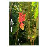 Pinza de langosta hawaiana del estilo de las pizarras blancas de calidad