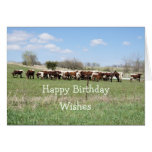 Pinzgauer 8399 Birthday  - customize any occasion Greeting Card
