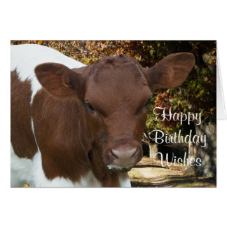 Pinzgauer calf Tansy-customize any occasin Card