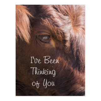 Pinzgauer Heifer 8374- customize any occasion Postcard