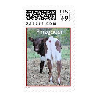 PinzgauerCalfStamp Stamps
