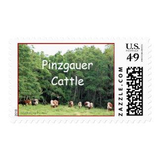 Pinzgauers que pasta sello-personalizar