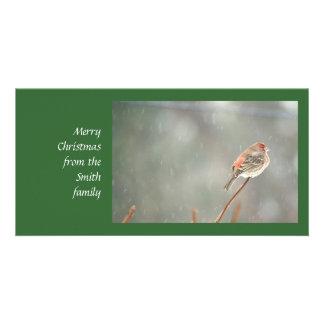 Pinzón de casa en una rama tarjetas con fotos personalizadas