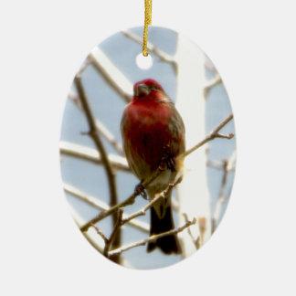 Pinzón de casa rojo que se sienta en rama en adorno navideño ovalado de cerámica