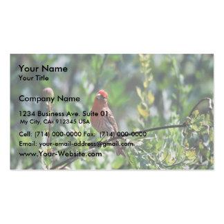 Pinzón de casa plantilla de tarjeta de visita