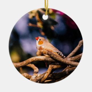Pinzón de cebra lindo en las ramitas adorno navideño redondo de cerámica