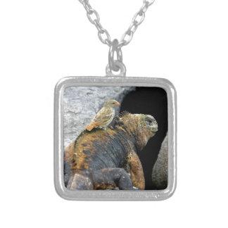Pinzón de Darwin que hace autostop en iguana marin Colgante Cuadrado