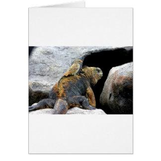 Pinzón de Darwin que hace autostop en iguana marin Felicitacion