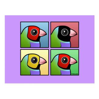 Pinzón de Gouldian de cuatro colores Postales