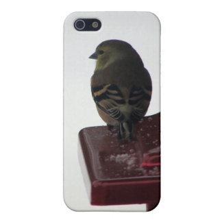 Pinzón del oro en alimentador del pájaro iPhone 5 fundas