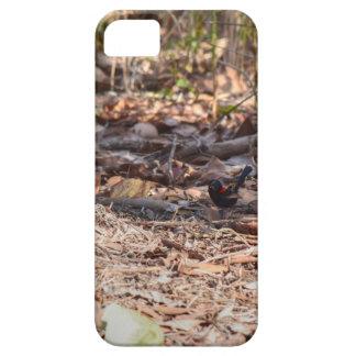 PINZÓN NEGRO Y ROJO EN QUEENSLAND RURAL AUSTRALIA iPhone 5 FUNDA