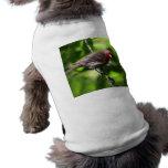 Pinzón púrpura camisa de perrito
