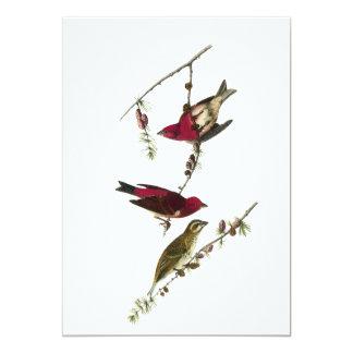 Pinzón púrpura de Audubon Anuncios Personalizados