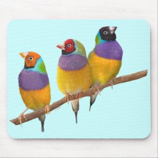 Pinzones coloridos de Gouldian en pasteles Mouse Pad