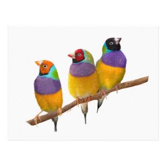 Pinzones coloridos de Gouldian en pasteles Tarjeta Postal