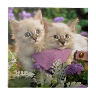 Pío juguetón de los gatitos fuera de una cesta de  teja  ceramica