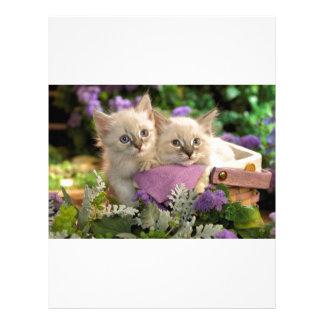 Pío juguetón de los gatitos fuera de una cesta de  plantillas de membrete